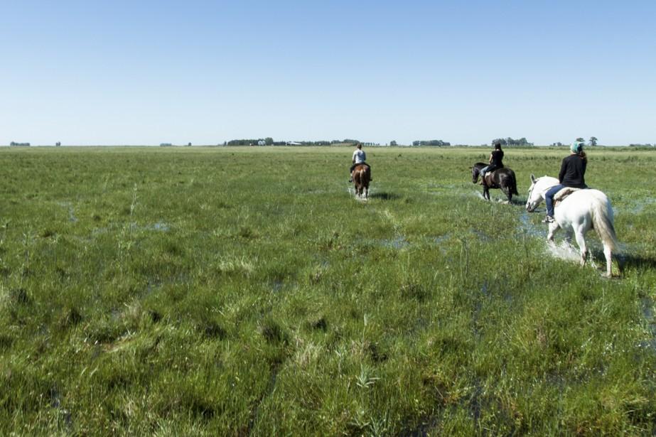 Dans les champs inondés par les pluies récentes, mieux vaut aller au pas. (Photo Federico Cabrera, collaboration spéciale)