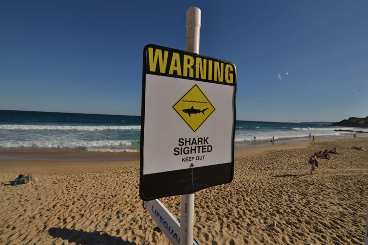 Un homme a été tué par un requin lundi au large de la côte est de... (Photo: AFP)