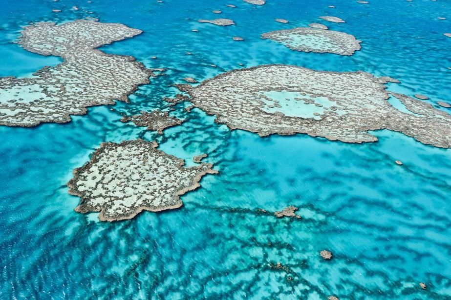 «Si rien n'est fait, la Grande barrière de... (PHOTO ARCHIVES AFP/INSTITUT AUSTRALIEN DE LA SCIENCE MARINE)