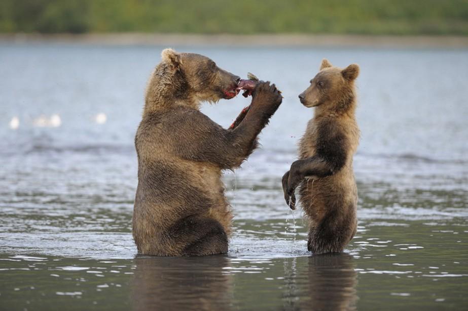 Dans Terre des ours, le postulat était simple:... (Photo Media Films)