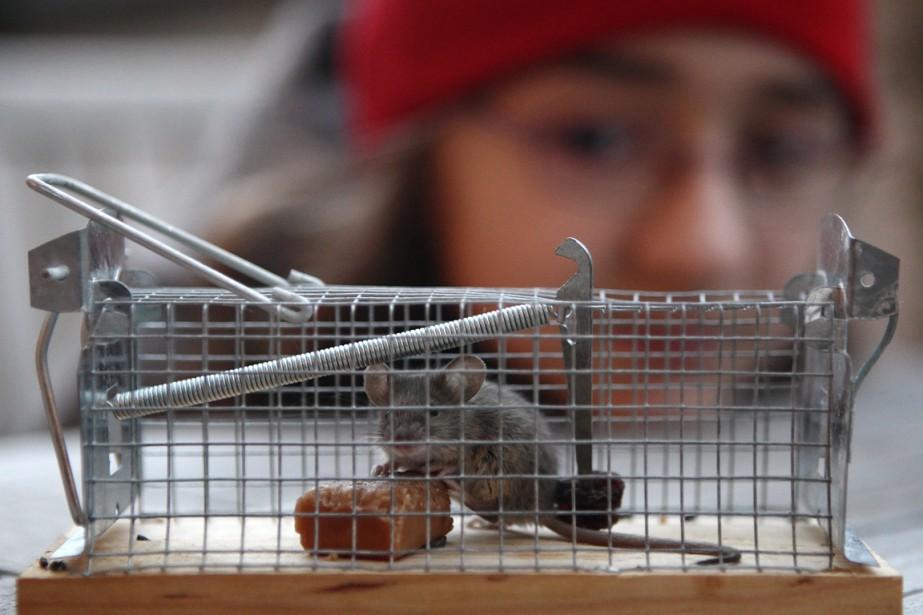 L'absence de prédateurs naturels sur l'île de Montréal... (PHoto Heinz-Peter Bader, archives Reuters)