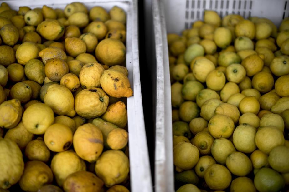 L'an dernier, l'idée de commercialiser les fruits et... (Photo d'archives)