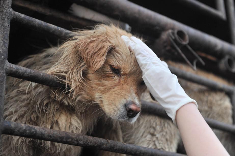 «En Chine, écorcher vif un chien ou pratiquer... (PHOTO ARCHIVES AGENCE FRANCE-PRESSE)