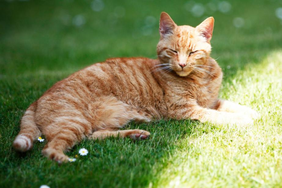 Louis le chat est devenu une icône de... (Photo tirée de Facebook)