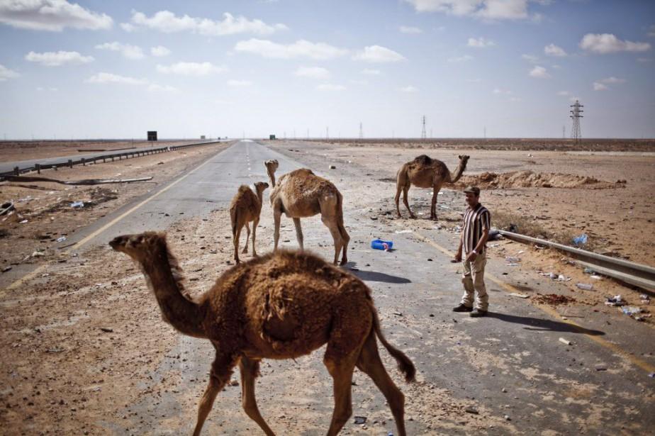 Un homme et quelques chameau, sur la route... (Photo Bryan Denton, The New York Times)