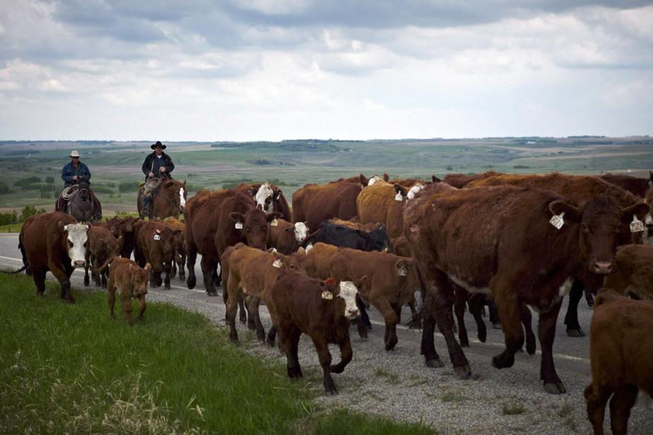 Les partisans des règles américaines affirment que les... (Photo Jeff McIntosh, archives La Presse canadienne)
