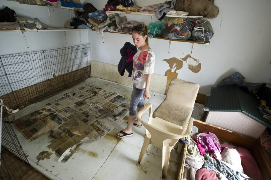 Isabelle Morin jette un dernier regard à l'endroit où d'autres chiens étaient gardés. (Martin Roy, LeDroit)