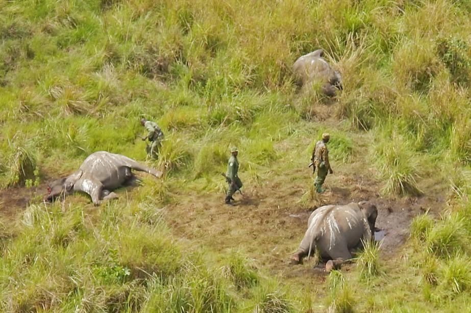 En juin 2014, African Parks et l'ICCN avaient... (PHOTO ARCHIVES AFRICAN PARKS/AP)