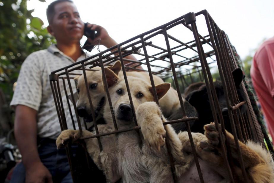«La plupart de ces animaux sont des animaux... (PHOTO KIM KYUNG-HOON, REUTERS)