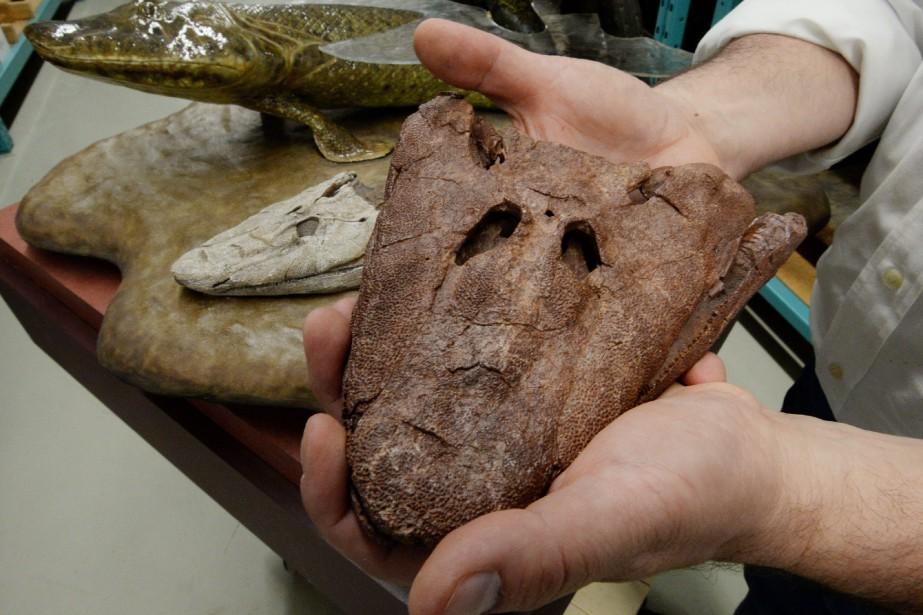 La découverte de ce fossile a considérablement augmenté... (Photo Sean Kilpatrick, La Presse Canadienne)