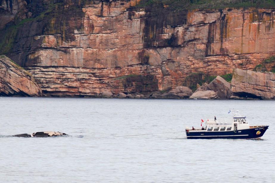 La carcasse de la baleine a été remorquée... (PHOTO FOURNIE PAR GREMM)