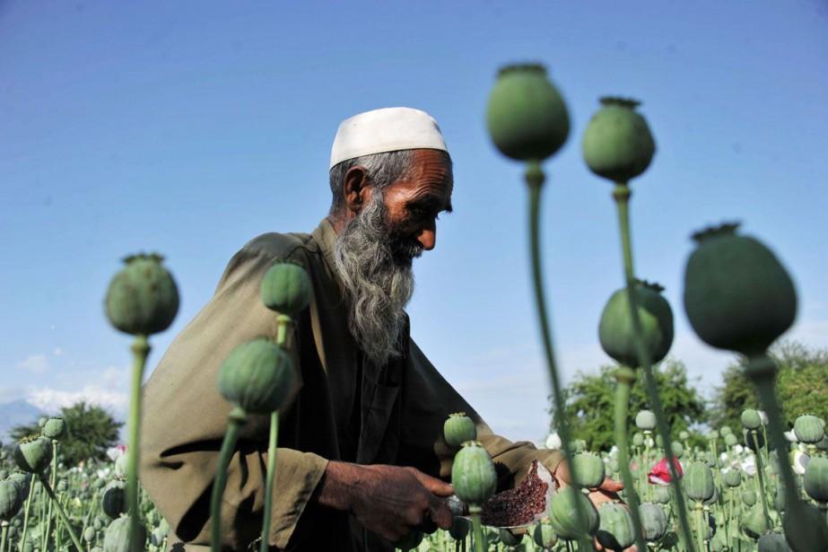 Cette hausse de la production d'opium est principalement... (PHOTO NOORULLAH SHIRZADA, ARCHIVES AFP)