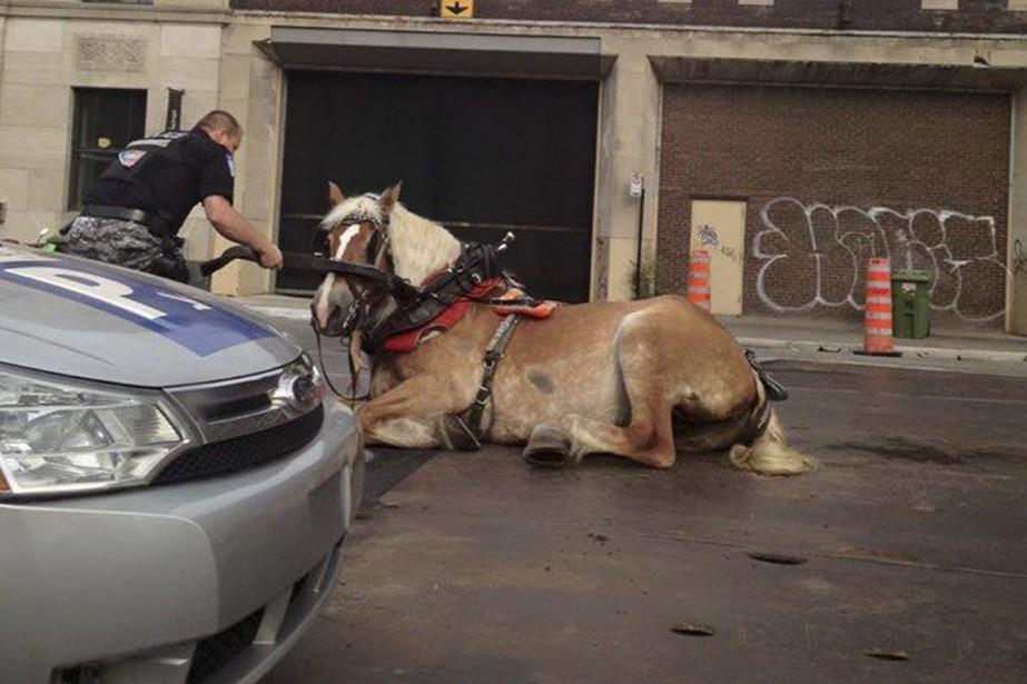 Un cheval a eu un accident mardi soir... (PHOTO TIREE DE FACEBOOK, PRISE PAR TAR SCHULZ)