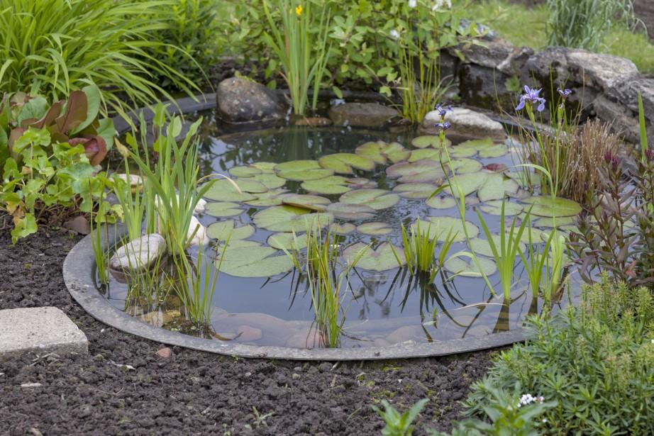 Awesome Bassin D Eau Jardin #9: LaPresse.ca