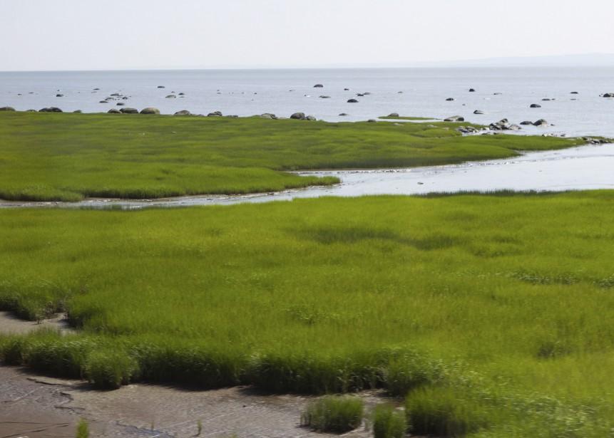 En juillet, les herbes vertes ondulent au vent. Dans quelques semaines, elles seront jaunes et orange (Le Soleil, Caroline Grégoire)