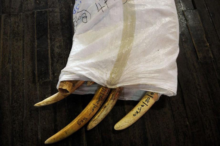 Les défenses d'éléphant très prisées par la médecine... (Photo Tony KARUMBA, AFP)