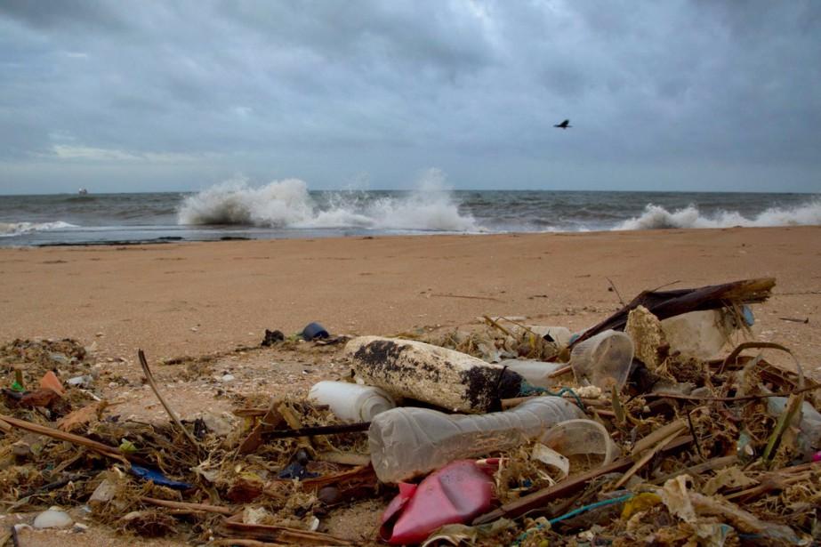 La majorité des oiseaux marins à travers le monde a déjà... (PHOTO ARCHIVES AP)