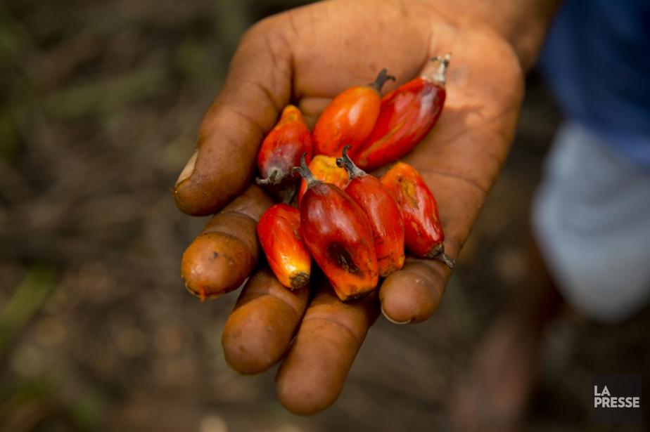 Le fruit du palmier à huile... (Photo David Boily, archives La Presse)