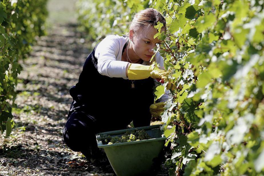 Michel Drappier, un viticulteur à Urville, a réservé... (PHOTO AFP)