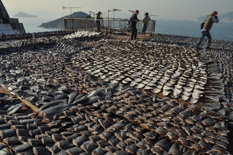 «Le problème du rejet (des poissons jugés non... (Photo AFP)