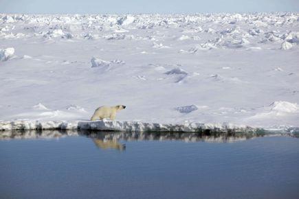 En Arctique, l'étendue de la banquise estivale a... (Photo Nick Cobbing, archives Reuters)