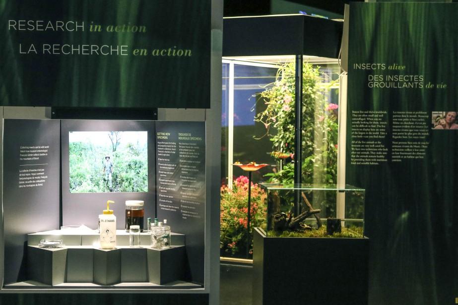 Une vitrine présente le matériel utiliser pour rechercher les insectes. (Patrick Woodbury, LeDroit)