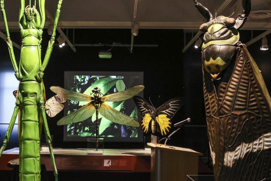 Des insectes de tous genres sont reproduits en grand format. (Patrick Woodbury, LeDroit)