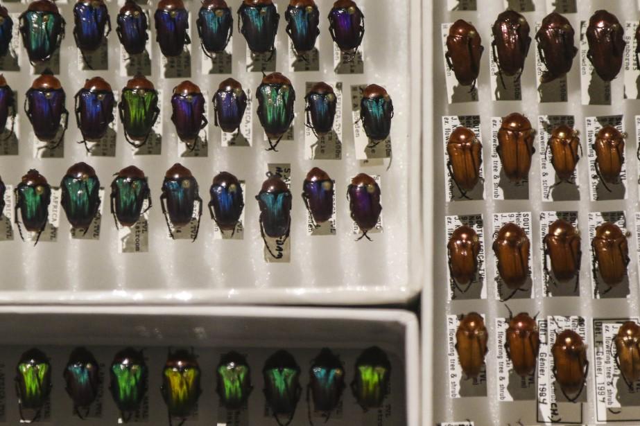 De nombreux spécimens descarabées (Patrick Woodbury, LeDroit)