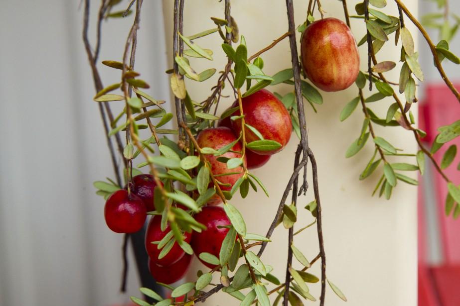 Un beau fruit rouge qui représente bien la saison automnale! (Martin Roy, LeDroit)