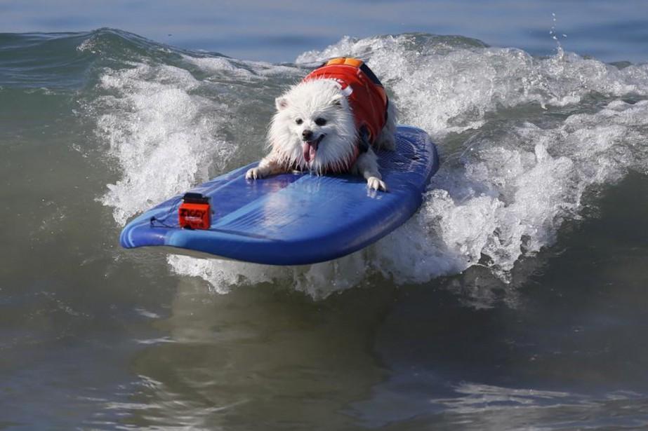 Un chien participe à la compétition de surf... (PHOTO LUCY NICHOLSON, ARCHIVES REUTERS)