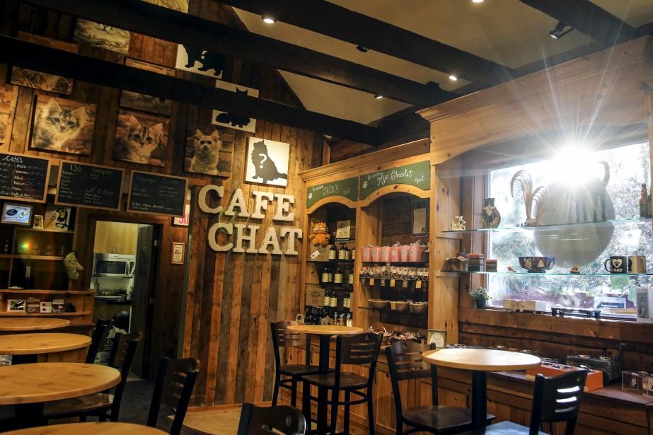 Le Café chat Sibérien, à Chelsea (Patrick Woodbury, LeDroit)