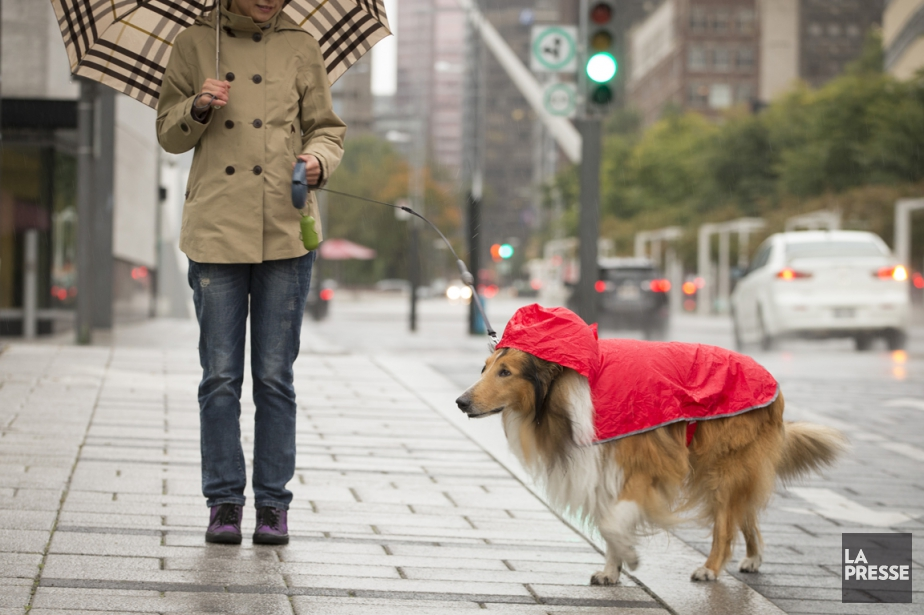 La pluie devrait se poursuivre durant toute la... (Photo Ivanoh Demers, archives La Presse)