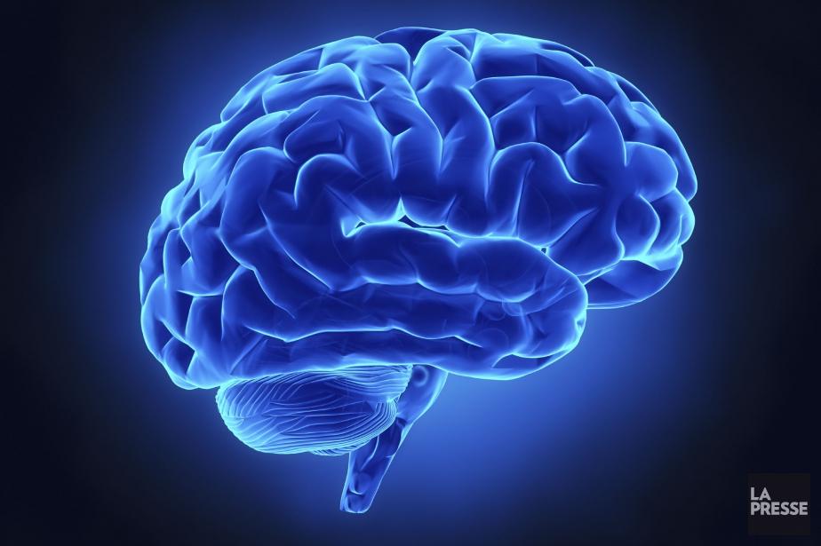 On savait déjà qu'avoir un gros cerveau n'était pas... (Photo d'archives)