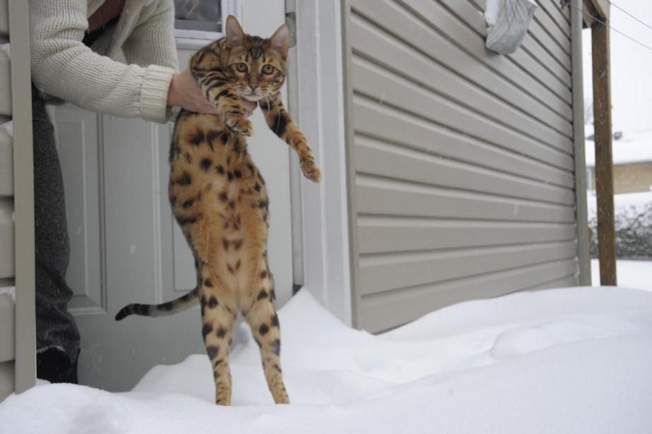 L'histoire ne dit pas si ce félin entrait ou sortait de sa maison, chose certaine, ce n'était pas une température à mettre un chat dehors. (Sylvain Mayer)