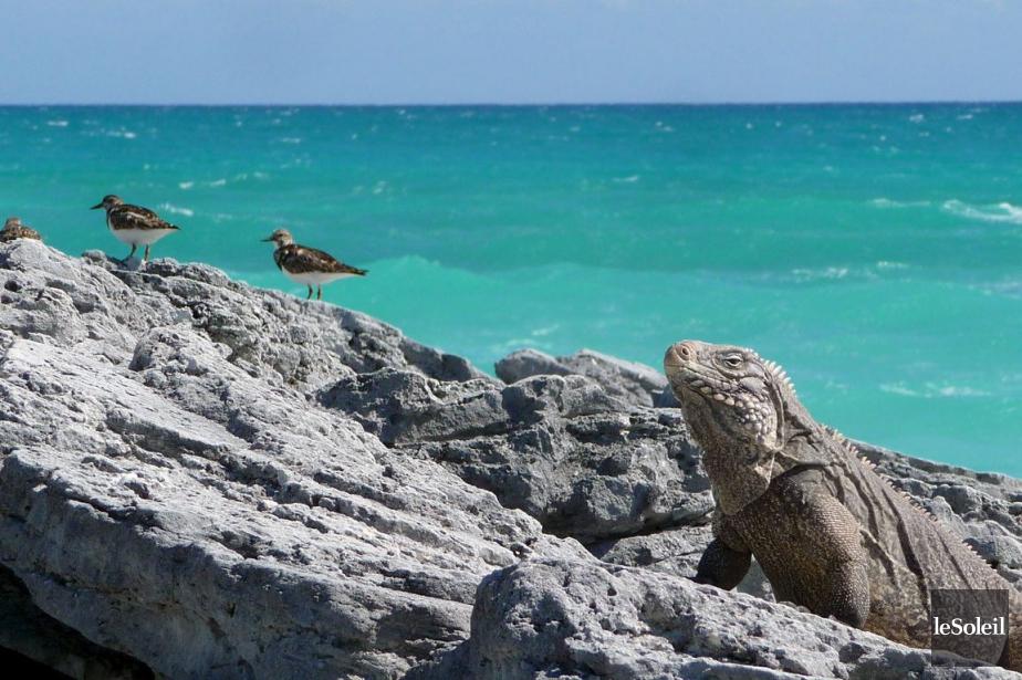 Cayo Largo, Cuba... (PHOTO ARCHIVES MARC LAROUCHE, LE SOLEIL)