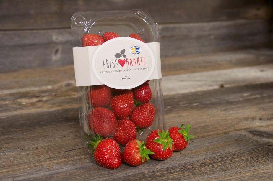 Les fraises des serres La Frissonnante.... (PHOTO FOURNIE PAR MÉTRO)