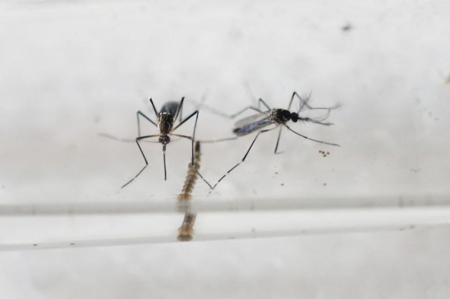 Comme la dengue et le chikungunya, Zika, qui... (PHOTO MARVIN RECINOS, AFP)
