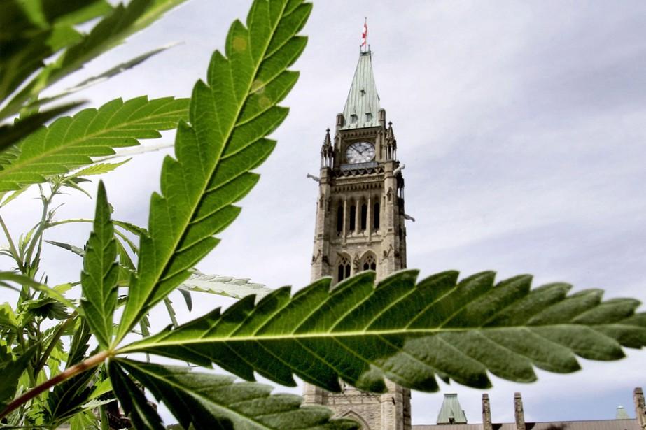 La valeur du marché noir du cannabis au... (PHOTO JIM YOUNG, ARCHIVES REUTERS)