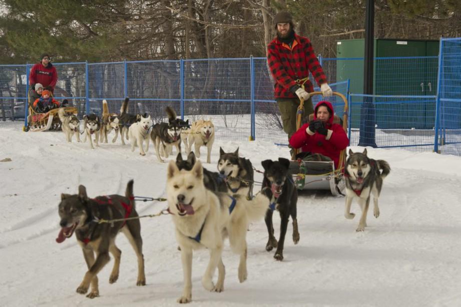 On peut s'adonner aux plaisirs de la randonnée de traîneaux à chiens au Domaine des flocons. (Martin Roy, LeDroit)