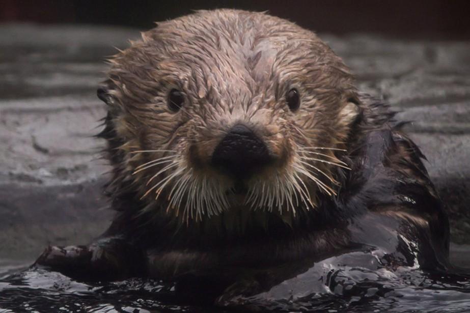 Une enquête du zoo de Calgary a... (Photo archives La Presse Canadienne)