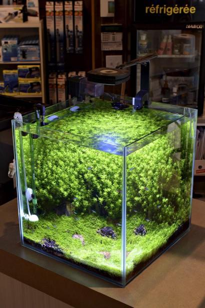 Une composition de Reef Origine, qui compte développer le concept d'<i>aquascaping</i>. (Le Soleil, Patrice Laroche)
