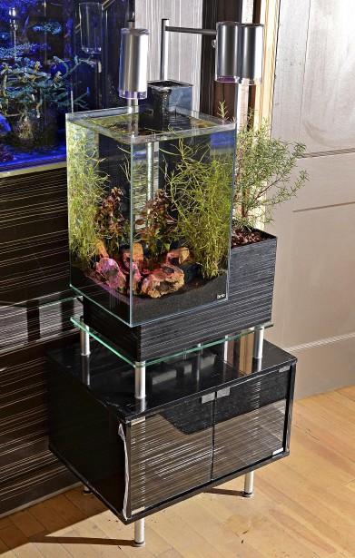 Brio, une compagnie québécoise, propose un système d'aquaponie où les plantes filtrent l'eau de l'aquarium et où les déchets organiques des poissons nourrissent le jardin. Un système en vente chez Reef Origine. (Le Soleil, Patrice Laroche)