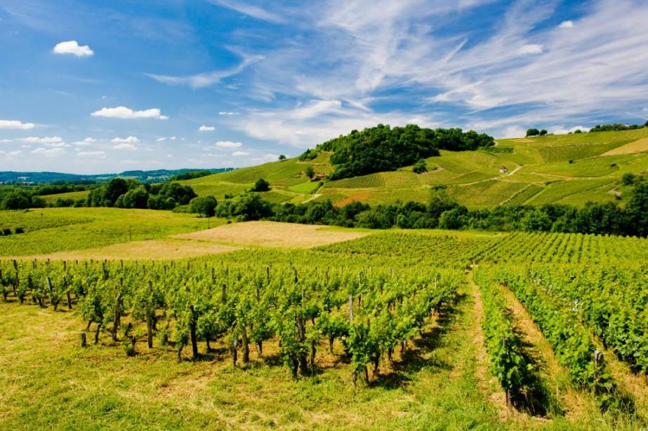 Les vins de la région du Jura sont... (PHOTO THINKSTOCK)