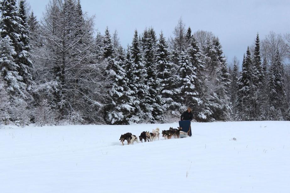 Manitou Mushers compte une meute de 26 chiens,... (PHOTO TIRÉE DU SITE DE MANITOU MUSHERS)