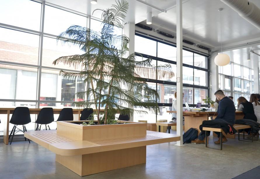Le café compte différentes zones : banquettes, tables hautes, grandes tables communes, tables basses. Et de la verdure avec ce pin de Norfolk. (Le Soleil, Yan Doublet)