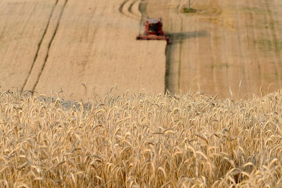 Un champ de blé, en France.... (PHOTO REMY GABALDA, ARCHIVES AFP)