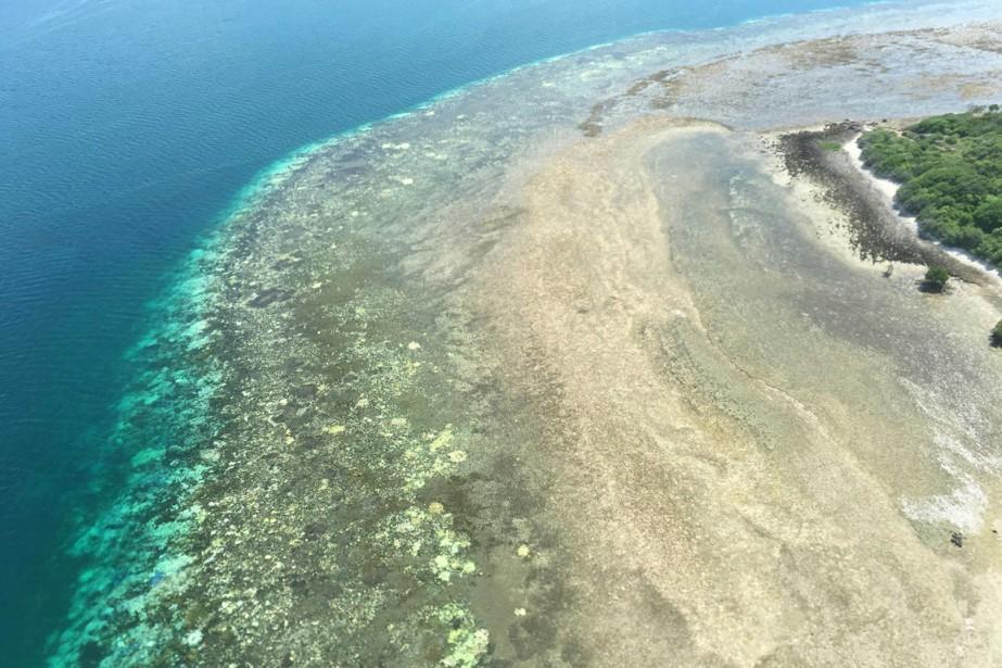 Le blanchissement des coraux est un phénomène de... (PHOTO JAMES KERRY, AFP)