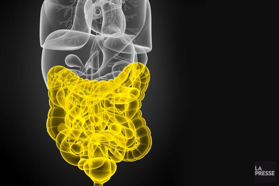Grâce à l'étude du microbiote, les traitements contre... (INFOGRAPHIE LA PRESSE)
