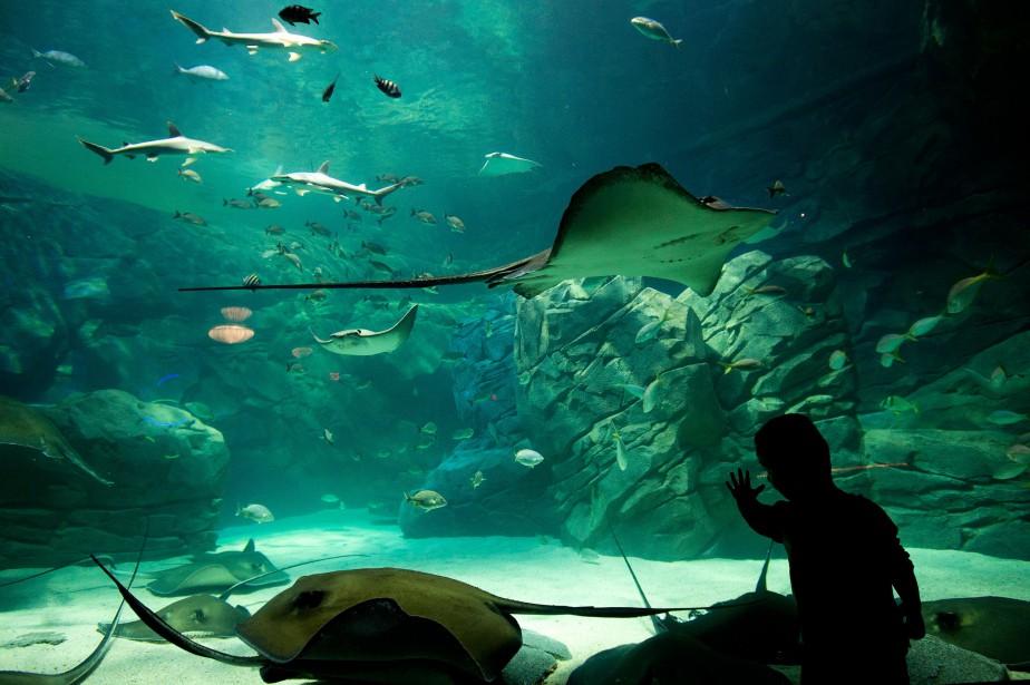 Un projet d 39 aquarium refait surface montr al r jean for Acheter des poissons