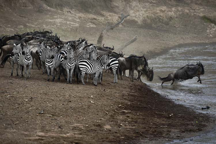 Le parc national du Serengeti, en Tanzanie, est listé par... (PHOTO AFP)